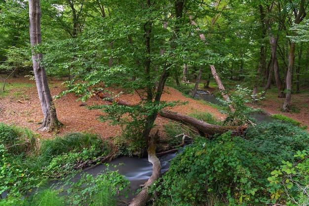 Piccolo fiume in una fitta foresta verde