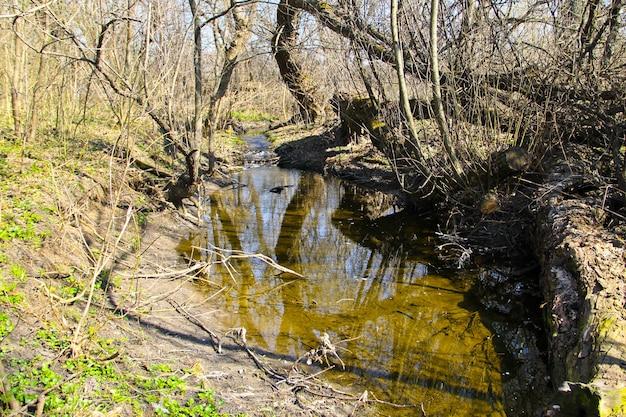 Piccolo fiume nella foresta in primavera