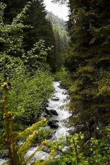 Un piccolo fiume nella foresta
