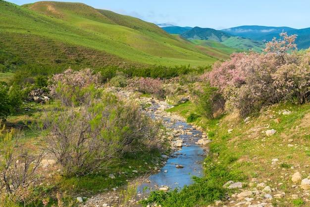Piccolo fiume negli altopiani