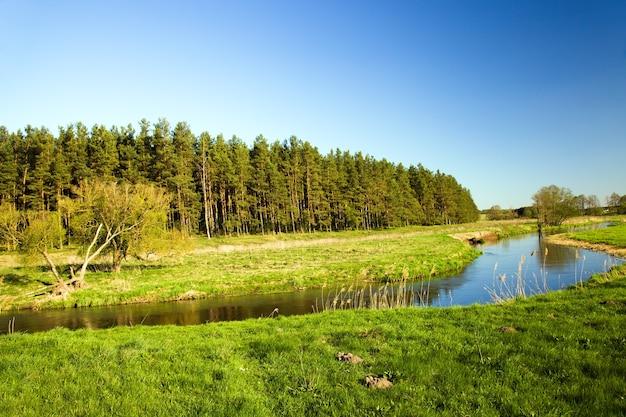 Un piccolo fiume in estate.