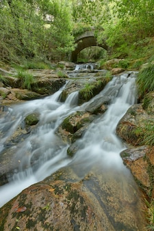 Piccolo fiume che passa sotto un vecchio ponte in pietra in mezzo a un bosco