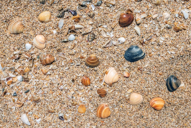 Piccole conchiglie sullo sfondo della costa dell'oceano