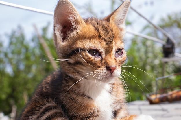 Un piccolo gattino malato seduto sulla strada. un gattino senzatetto è affamato e malato abbandonato da solo in strada.
