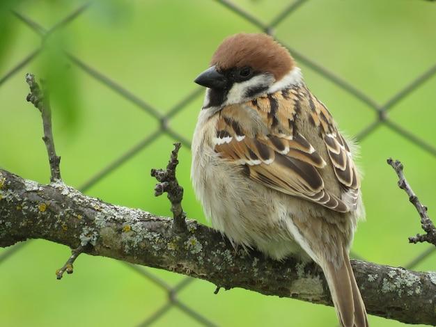 Un piccolo passero su un albero in un giorno d'estate