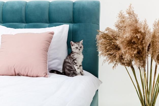 Piccolo gattino soriano scottish fold sul letto