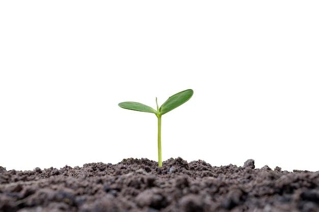 Piccolo albero che cresce sul terreno isolato su sfondo bianco concetto di sviluppo della crescita aziendale