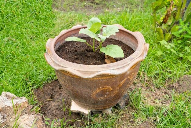 Una piccola piantagione di alberi in vaso