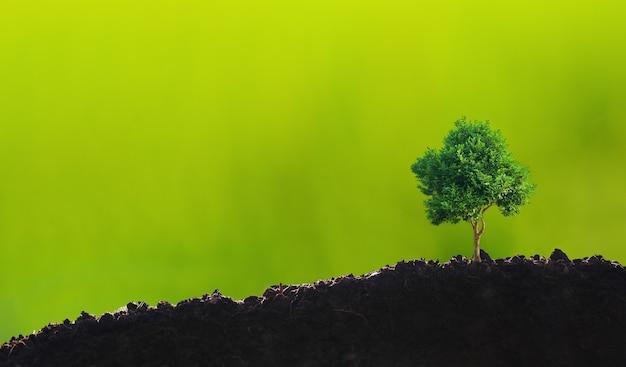 Piccolo albero sopra il suolo su sfondo verde, concetto di csr