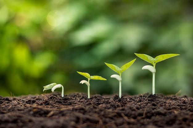 Piccoli alberi di diverse dimensioni che crescono su sfondo verde concetto di cura dell'ambiente e giornata mondiale dell'ambiente.