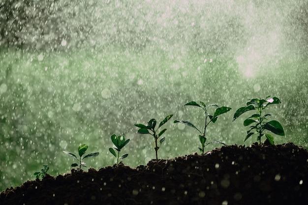 Piccoli alberi di diverse dimensioni su sfondo di spruzzi d'acqua, il concetto di gestione ambientale e la giornata mondiale dell'ambiente con il concetto di csr