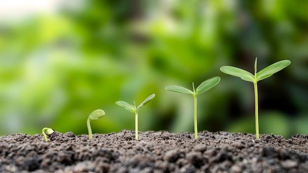 Piccoli alberi che crescono sul concetto di cura del suolo e dell'ambiente e giornata mondiale dell'ambiente