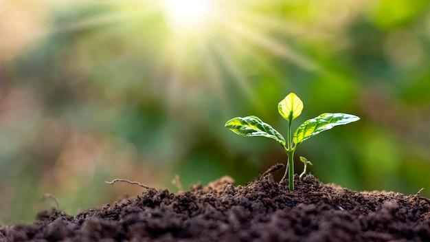 Piccoli alberi con foglie verdi che crescono naturalmente e luce solare morbida, idea di crescita delle piante sostenibile.