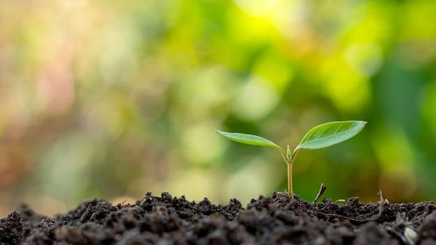 Piccoli alberi con foglie verdi, crescita naturale e luce solare, il concetto di agricoltura e crescita sostenibile delle piante