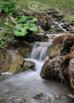 Piccola cascata sul ruscello di montagna nella foresta.