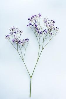 Piccoli fiori bianchi di gypsophila su sfondo blu, spazio per il testo, minimalismo