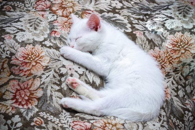 Piccolo gattino bianco sdraiato e dormendo sulla coperta a motivi floreali.