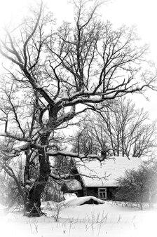 Piccola casa forestale in legno coperta di neve