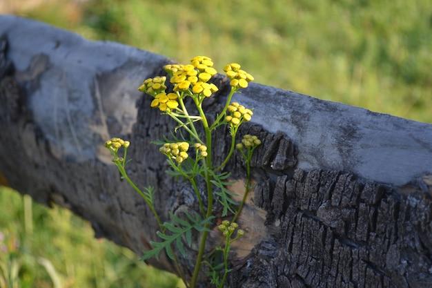 Piccoli fiori gialli su uno stelo al mattino