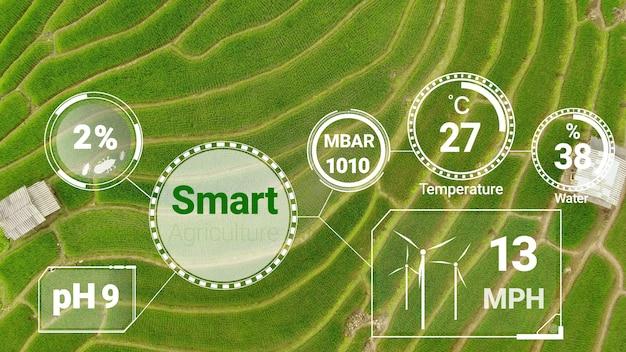 Tecnologia di agricoltura digitale intelligente grazie alla gestione futuristica della raccolta dei dati dei sensori da parte dell'intelligenza artificiale per controllare la qualità della crescita e del raccolto. piantagione assistita da computer coltiva il concetto.