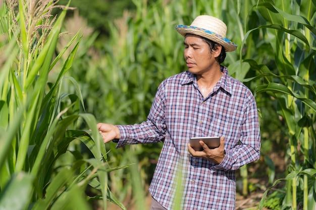 Agricoltura intelligente tecnologia agricola, agricoltore asiatico in cappello utilizzando una tavoletta digitale in piedi nella sua fattoria nel campo di mais sotto il cielo blu