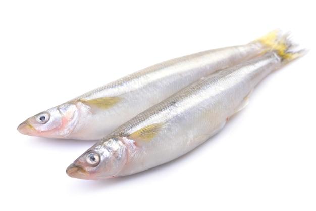 Odore di pesce su sfondo bianco