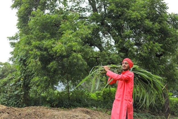 Agricoltore asiatico sorridente che trasporta erba verde fresca sulla sua spalla per l'alimentazione del bestiame