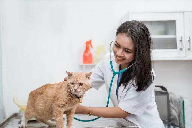 Veterinario asiatico sorridente che esamina un gatto sul tavolo presso la clinica