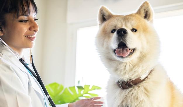 Cane sorridente in un veterinario brillante