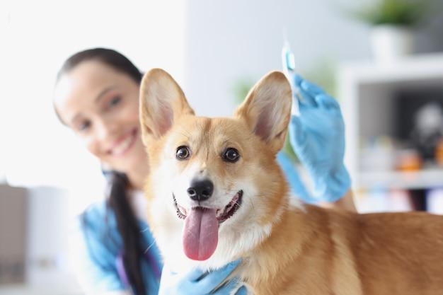 Il medico veterinario femminile sorridente conduce l'esame fisico della clinica veterinaria del cane