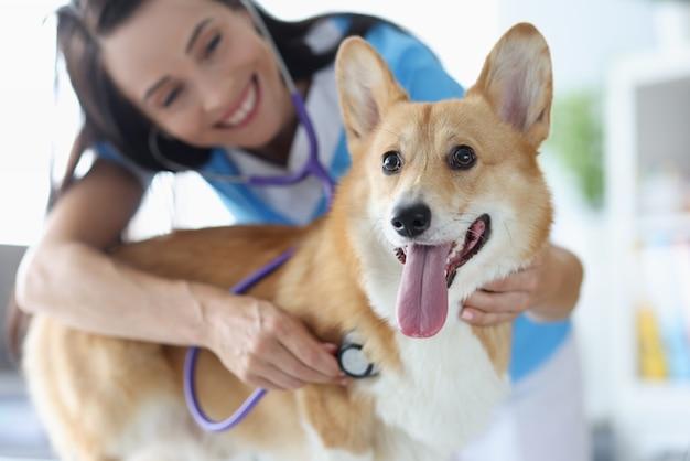 La veterinaria sorridente ascolta il battito cardiaco del cane welsh corgi con l'animale stestoscope