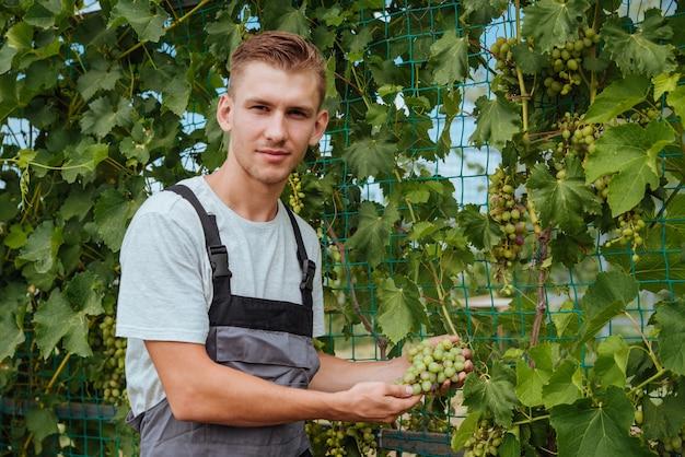 Sorridente felice proprietario giovane uomo caucasico lavorando e giardinaggio la sua fattoria, vigneti in autunno. il giovane sta controllando l'uva in crescita prima della raccolta