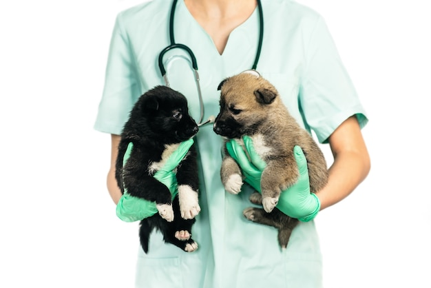 Veterinario sorridente e cucciolo in clinica isolato su sfondo bianco
