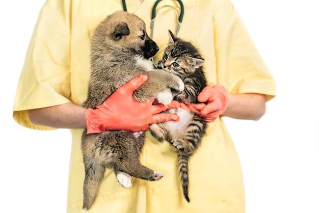 Veterinario sorridente e cucciolo e gattino in clinica isolati su sfondo bianco