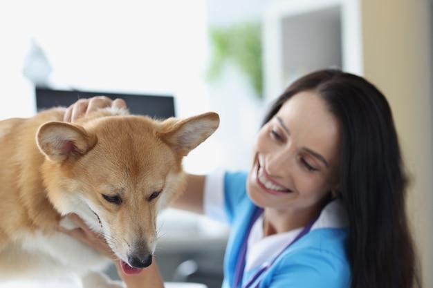 Il medico veterinario sorridente conduce l'esame fisico del concetto di assicurazione sanitaria per animali domestici del cane