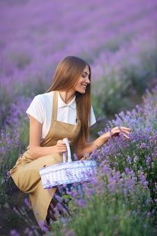 Donna sorridente che raccoglie il raccolto nel campo di lavanda