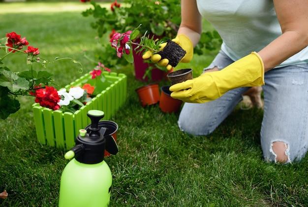 La donna sorridente trapianta i fiori nel giardino