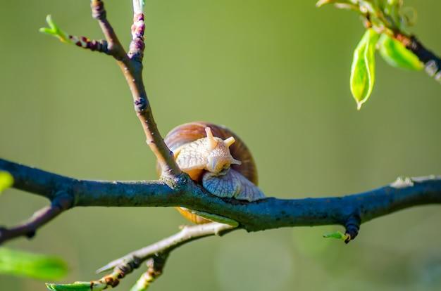 Lumaca su un ramo