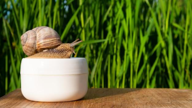 Lumaca su un vasetto di crema con mucina nel giardino estivo