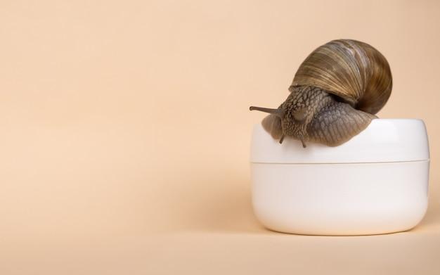 Crema di lumaca e mucina su superficie beige