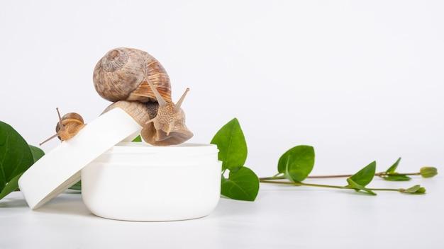 Crema di mucina di lumaca con copia spazio, cosmetici per la cura della pelle.