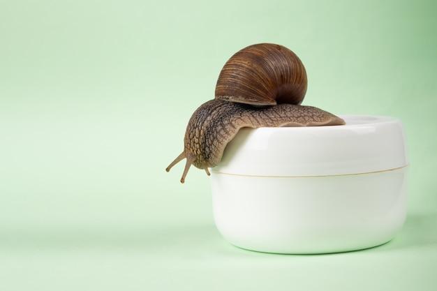 Crema curativa alla mucina di lumaca con copia spazio, cura della pelle.