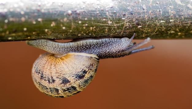 Una lumaca che scivola a testa in giù sul ramo di un albero