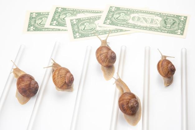 Le lumache corrono al traguardo con i soldi. svolta e perseveranza nel settore.