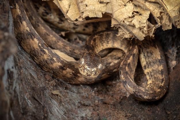 Serpente nascosto nei buchi dell'albero