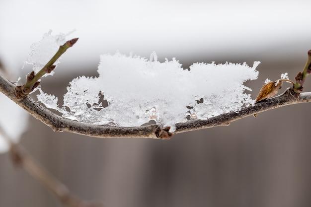 La neve sul primo piano dei rami