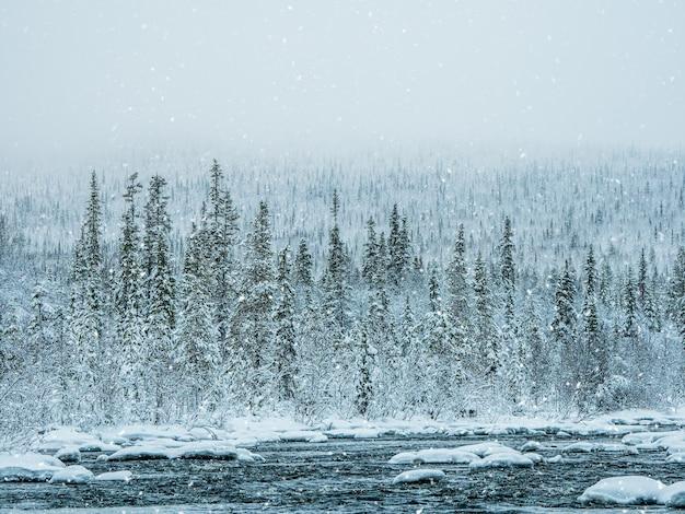 Fitta foresta di abeti rossi coperta di neve. natura pura incontaminata.