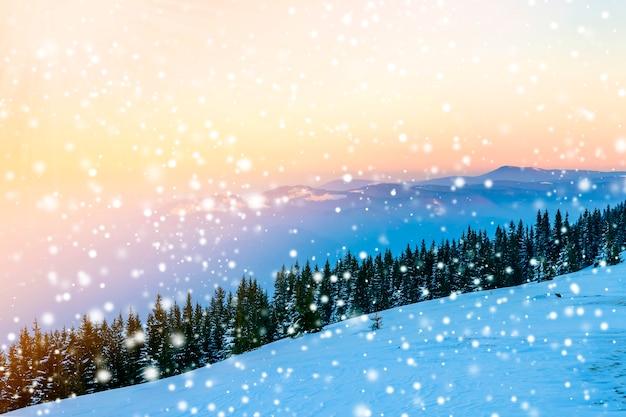 Colline innevate e pini in montagna d'inverno. paesaggio artico. scena all'aperto di tramonto colorato, concetto di celebrazione di felice anno nuovo.