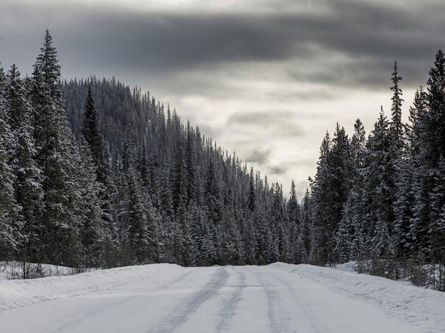 Strada innevata che passa attraverso la foresta, maligne lake, jasper, jasper national park, alberta, canad