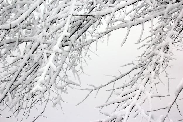 Rami di alberi innevati in inverno